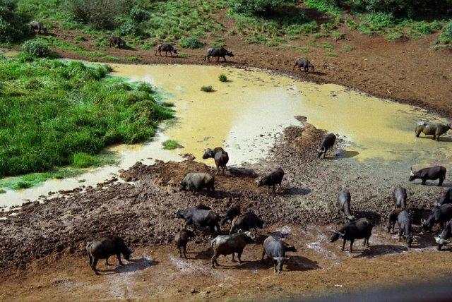 Nature World Adventures - Africa Safari 1
